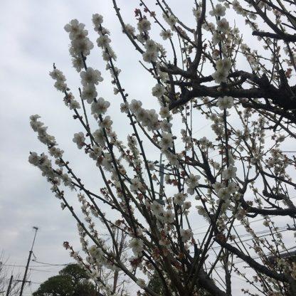 建物検査1|熊本の注文住宅工務店ファミリアホーム
