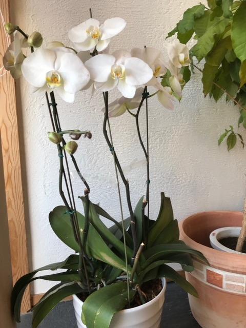 ファミリアホームの植物4|熊本の注文住宅工務店ファミリアホーム