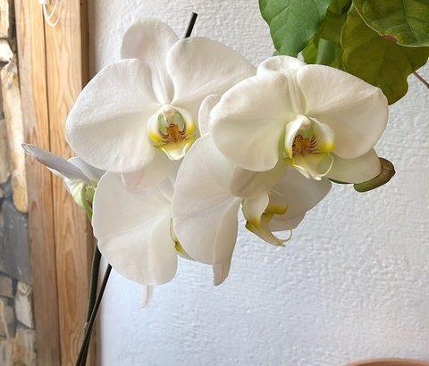 ファミリアホームの植物1|熊本の注文住宅工務店ファミリアホーム